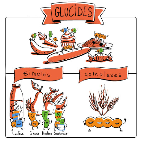 glucides simples, glucides complexes